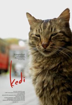 panfleto 'Gatos'